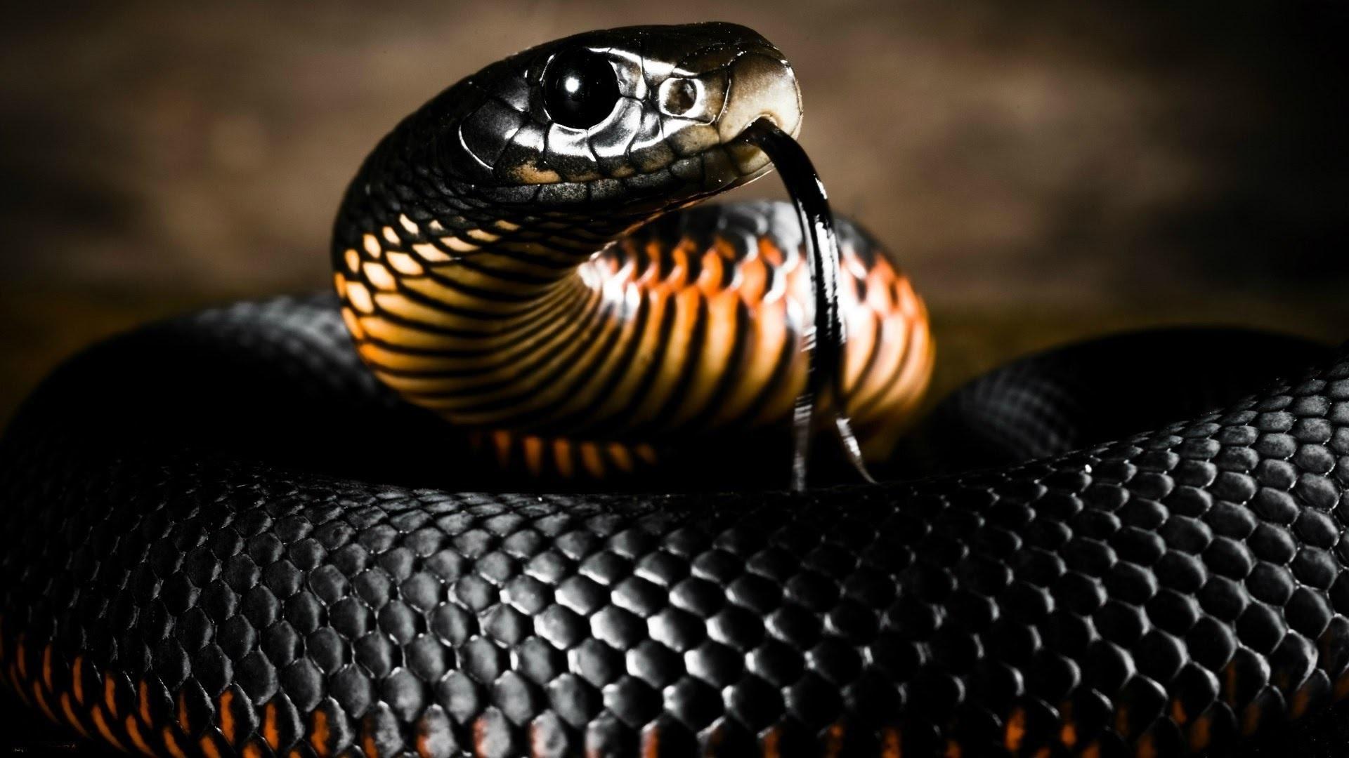 К чему снится змея? Трактование змей в различных сонниках