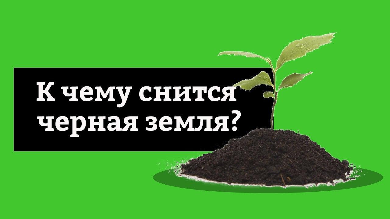 сонник черная земля